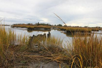 Healthy Coastal Ecosystems: Historic Greenwich Township Project